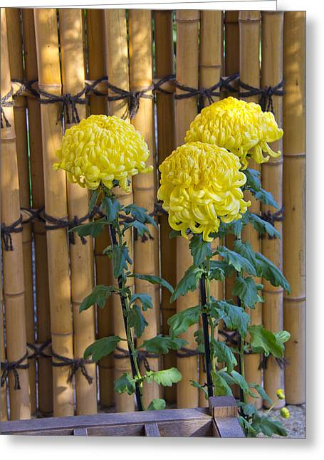 Bamboo Fence Greeting Cards - Three Yellow Blooms Greeting Card by Richard Baker