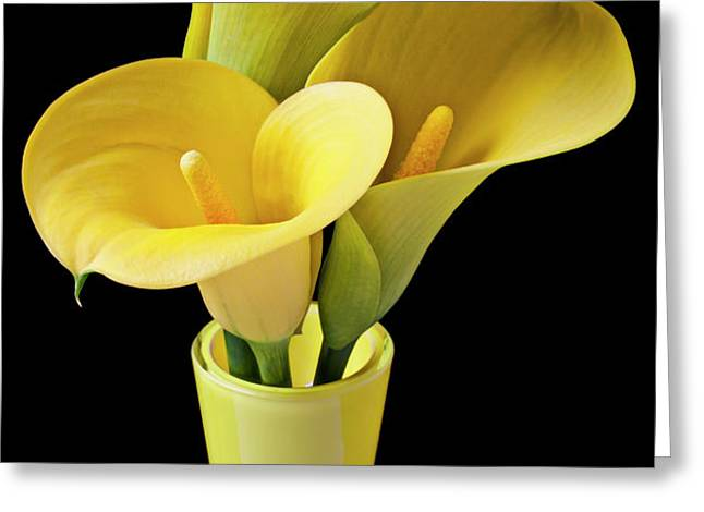 Three yellow calla lilies Greeting Card by Garry Gay