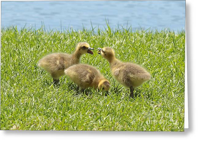 Baby Bird Greeting Cards - Threes a Crowd Greeting Card by Carol Groenen