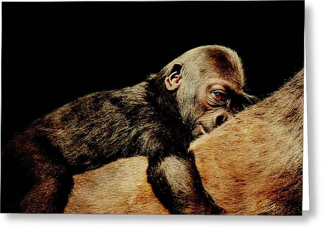 Ape Photographs Greeting Cards - Through the Eyes of Hasani . Square Greeting Card by Wingsdomain Art and Photography