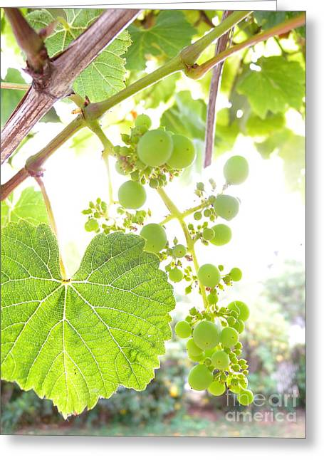 Transpose Greeting Cards - Through The Grapevine Greeting Card by Kaira Burt