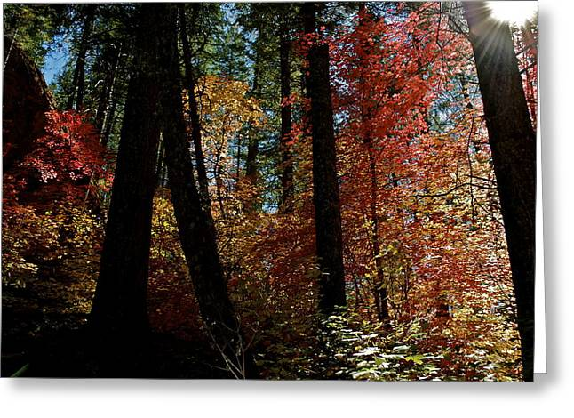 Oak Creek Greeting Cards - Through the Light  Greeting Card by Katherine Halstead