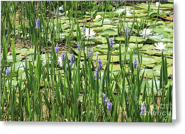 Florida Pond Greeting Cards - Through the Lily Pond Greeting Card by Carol Groenen