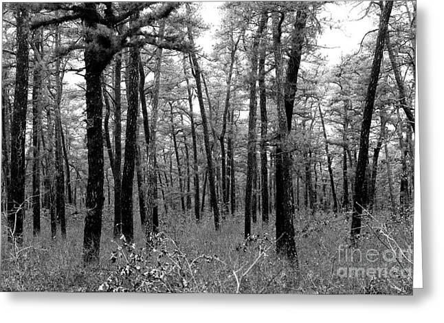 Through The Pinelands Greeting Card by John Rizzuto