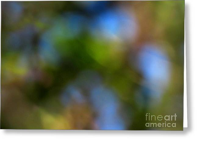 Original Photographs Greeting Cards - Through The Trees Greeting Card by Gardening Perfection