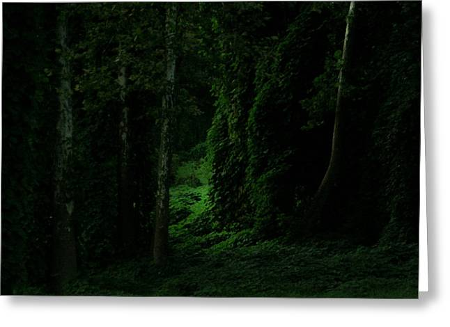 Lush Green Greeting Cards - Through the Woods Dark and Deep Greeting Card by Douglas Barnett