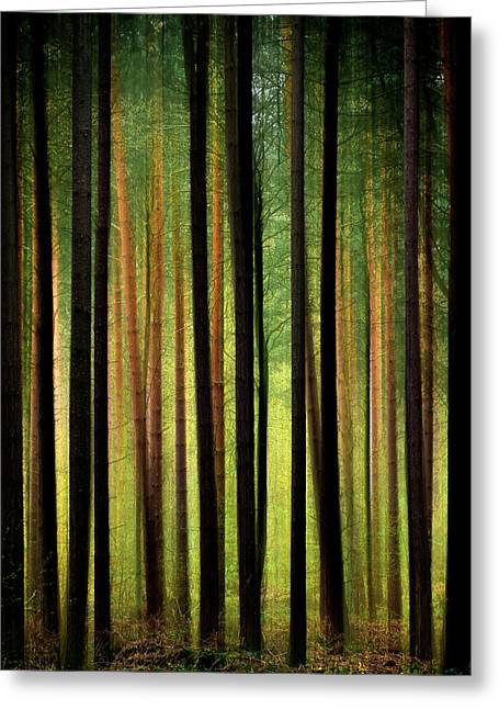 Fantasy Tree Greeting Cards - Through the Woods Greeting Card by Svetlana Sewell