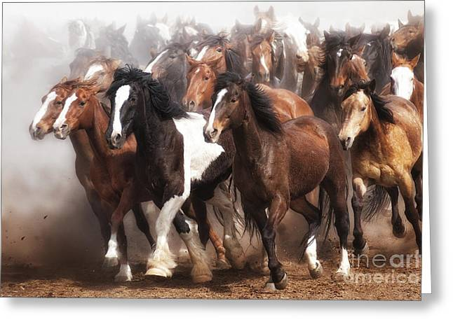 Thundering Hooves Greeting Card by Heather Swan