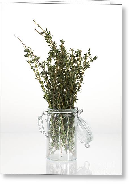 Flavorings Greeting Cards - Thyme Greeting Card by Wolfgang Steiner