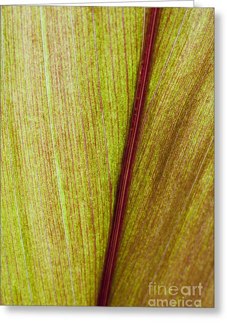 Moist Greeting Cards - Ti Leaf Close-up Greeting Card by Joe Carini - Printscapes