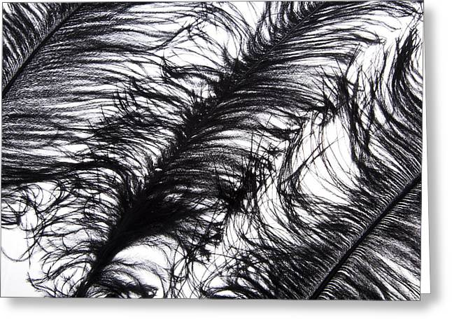 Ostrich Feathers Greeting Cards - Tickles II Image 2 Greeting Card by Monte Arnold