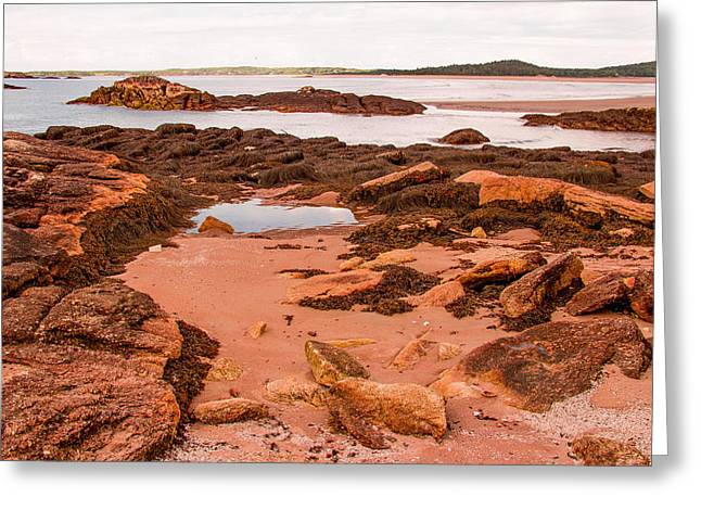 Maine Beach Greeting Cards - Tidal Pool Greeting Card by Laurie Breton