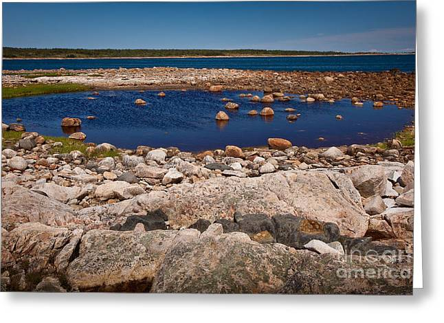 New England Wilderness Greeting Cards - Tidal Pool Greeting Card by Susan Cole Kelly