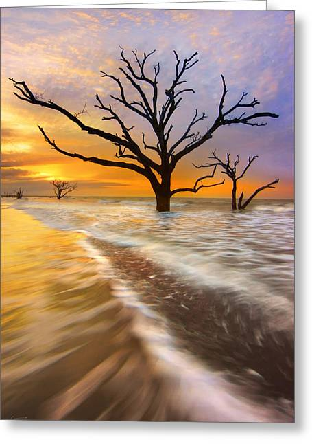 Tidal Trees - Craigbill.com - Open Edition Greeting Card by Craig Bill