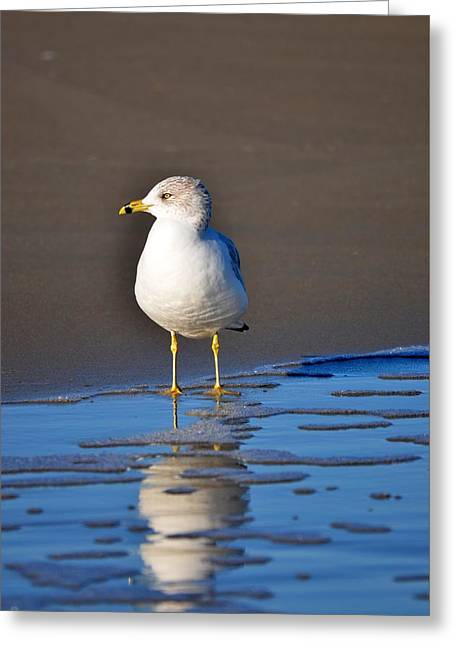 Flying Seagull Greeting Cards - Tides In Greeting Card by Russell Bonovitch