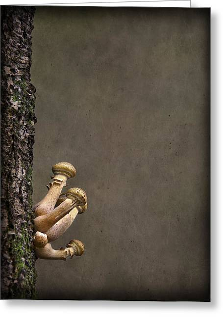 Fungi Photographs Greeting Cards - Ties That Bind Greeting Card by Evelina Kremsdorf