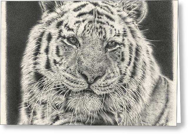 Animals Love Drawings Greeting Cards - Tiger Drawing Greeting Card by Heidi Vormer