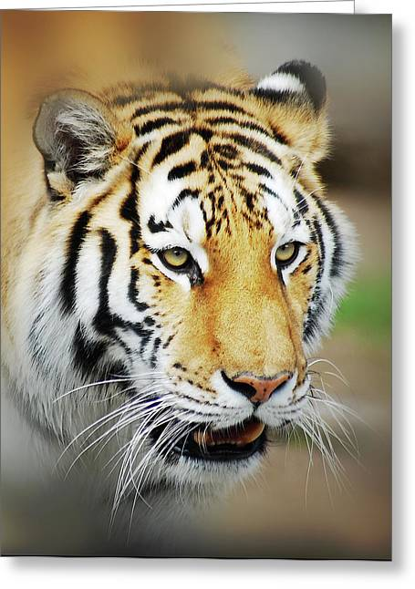Wild Life Photographs Greeting Cards - Tiger Eyes Greeting Card by Michael Peychich