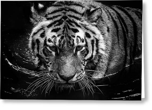 Tiger In Water Greeting Card by Lukas Holas