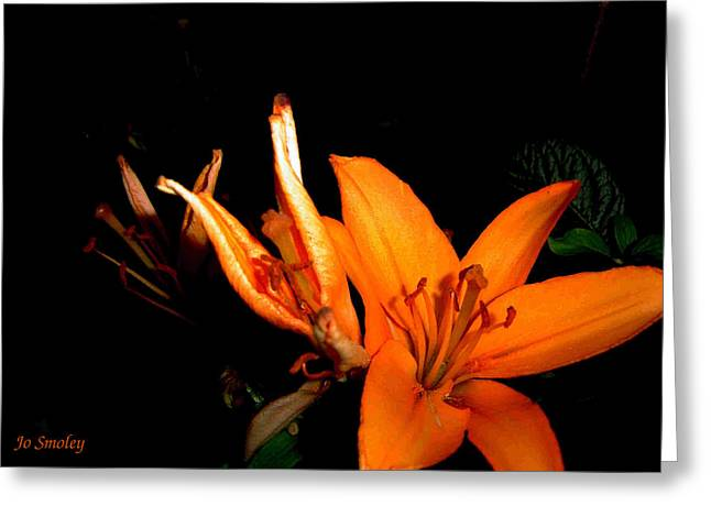 Silouette Greeting Cards - Tiger Lily Greeting Card by Joanne Smoley