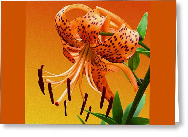 Tiger Lily Greeting Card by Mike McGlothlen