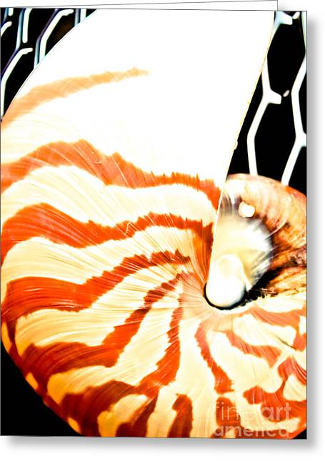 Shell Pattern Greeting Cards - Tiger Nautilus Greeting Card by Colleen Kammerer