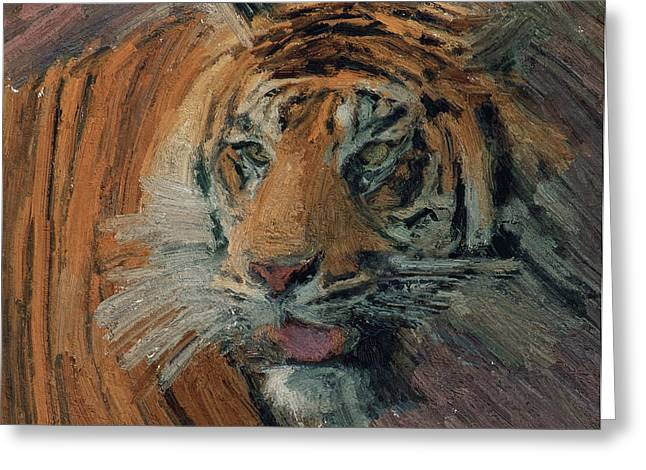 House Pet Greeting Cards - Tiger on Hunting Greeting Card by Yury Malkov