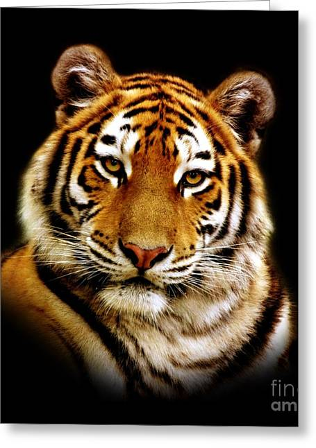 Wildlife Photographs Greeting Cards - Tiger Greeting Card by Photodream Art