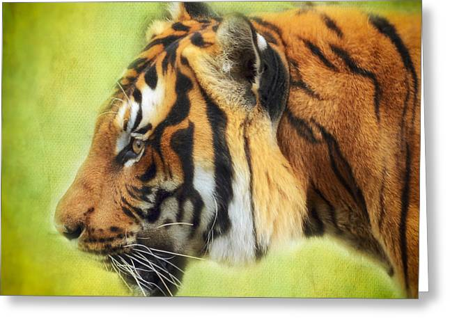 Wildcat Greeting Cards - Tiger Portrait Greeting Card by SK Pfphotography