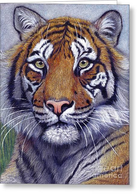 Cat Drawings Greeting Cards - Tiger portrayal Greeting Card by Svetlana Ledneva-Schukina