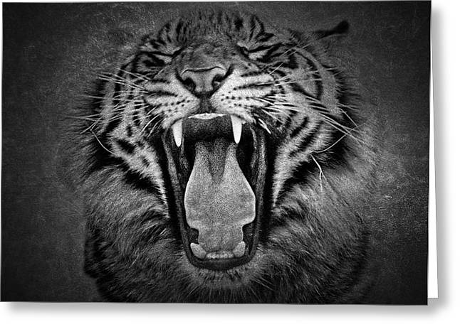 Jaguars Greeting Cards - Tiger Roar Greeting Card by Athena Mckinzie