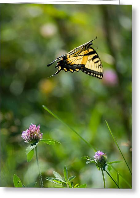 The Tiger Greeting Cards - Tiger Swallowtail Butterfly In Flight Greeting Card by Jan M Holden