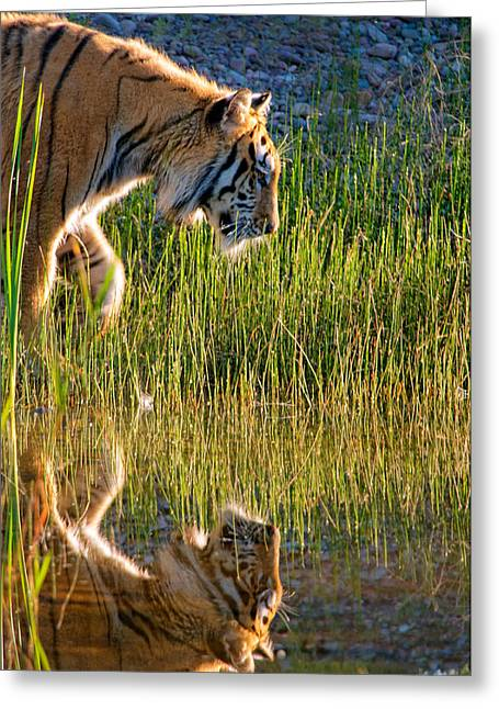 Defensive Greeting Cards - Tiger Tiger burning bright Greeting Card by Melody Watson