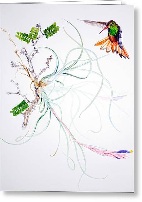 Bromeliad Greeting Cards - Tillandsia baileyi Greeting Card by Sue Sill