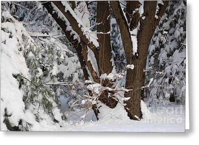 Wintry Greeting Cards - Time for Winter Greeting Card by Jari Hawk