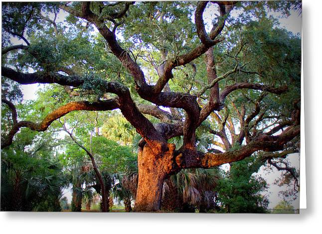 Tree Roots Greeting Cards - Time to Climb Greeting Card by Faith Williams