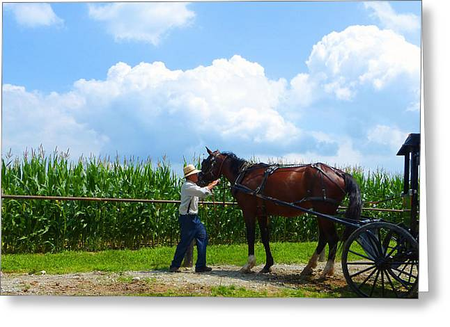 Amish Community Greeting Cards - Time To Go Home Greeting Card by Tina M Wenger