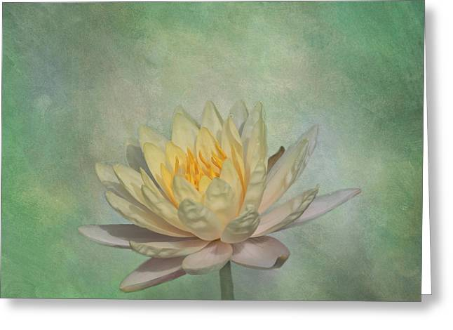 Kim Photographs Greeting Cards - Timeless Beauty - Yellow Water Lily Greeting Card by Kim Hojnacki