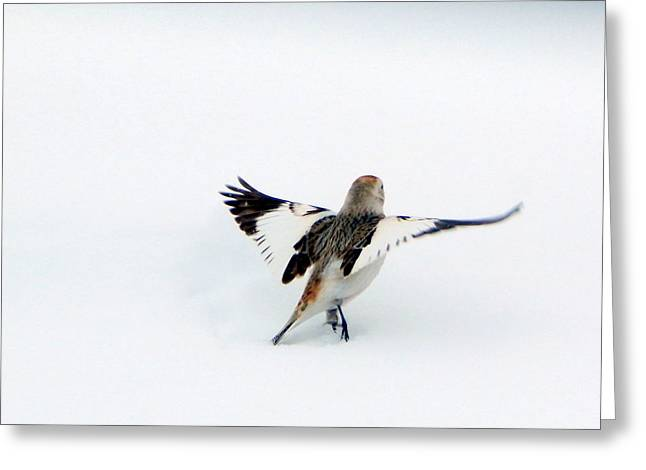 Wintry Greeting Cards - Tiny Dancer Greeting Card by Karen Cook
