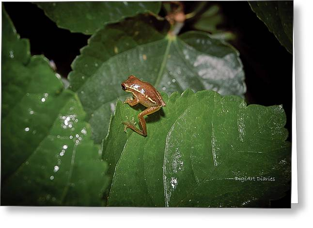 Hiding Greeting Cards - Tiny Escapee Greeting Card by DigiArt Diaries by Vicky B Fuller