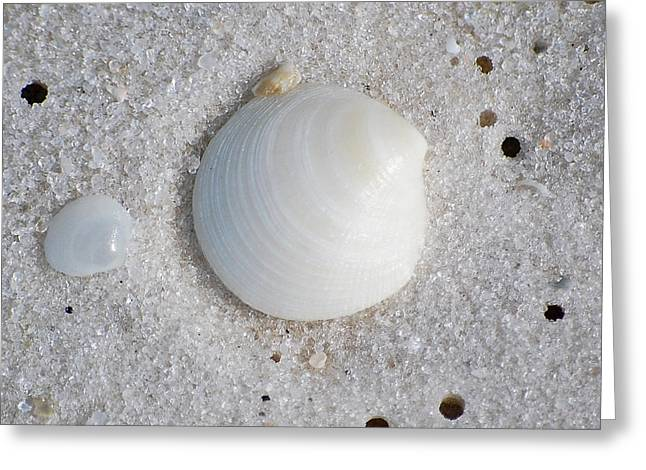 Texas Greeting Cards - Tiny Pastel Sea Shells in Fine Wet Sand Macro Square Format Greeting Card by Shawn O