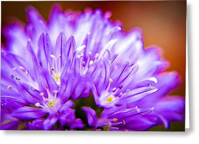 Color Enhanced Greeting Cards - Tiny Purple Puffy Bloom Greeting Card by Sarah  Kish