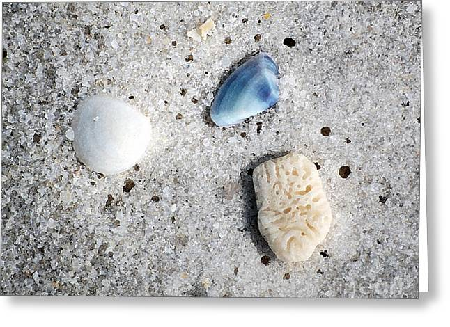 Florida Greeting Cards - Tiny Sea Shells and a Piece of Coral in Fine Wet Sand Macro Watercolor Digital Art Greeting Card by Shawn O