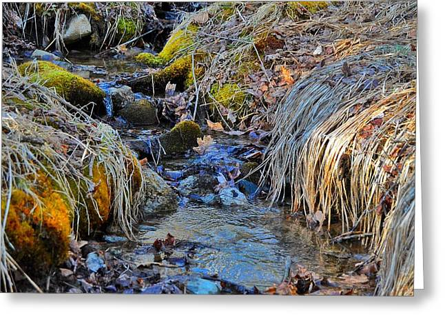 Maine Spring Greeting Cards - Tiny Stream  Greeting Card by Angela Michaud