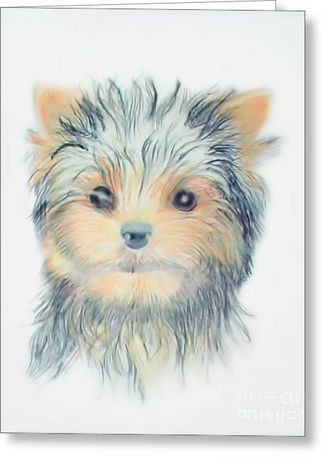 Brook Pastels Greeting Cards - Tiny Terrier Greeting Card by Stephen Brooks
