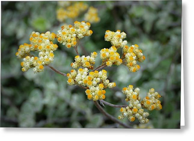Tiny Yellow Flowers Greeting Card by Carla Parris