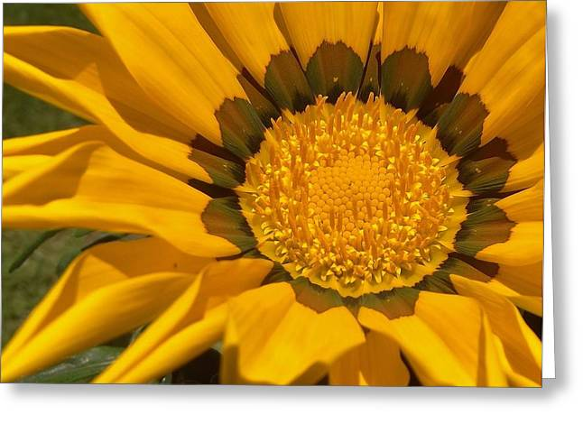 Indiana Flowers Greeting Cards - Tiny Zenia Bloom   Spring   Indiana Greeting Card by Rory Cubel