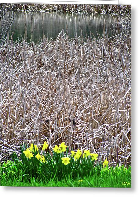 Sweep Of The Land Greeting Cards - Tipping Into Spring Greeting Card by Debra     Vatalaro