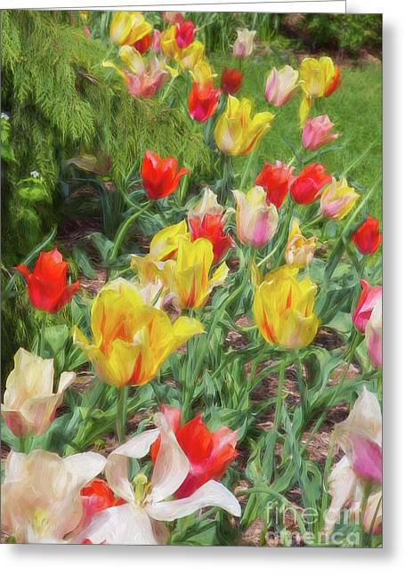 Tiptoe Through The Tulips  Greeting Card by A New Focus Photography