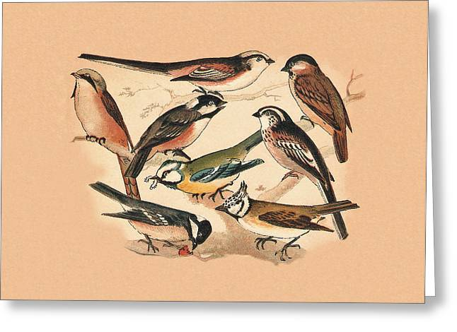 White Beard Mixed Media Greeting Cards - Tits Greeting Card by Eric Kempson
